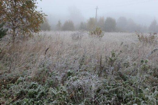 Šalnos tik pradžia: galime sulaukti ir pirmojo sniego