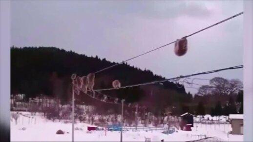 Beždžionės akrobatės pralinksmino neįprastą vaizdą užfiksavusią japonę