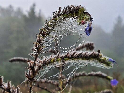 orai staigmenų nepateiks – lietus traukiasi