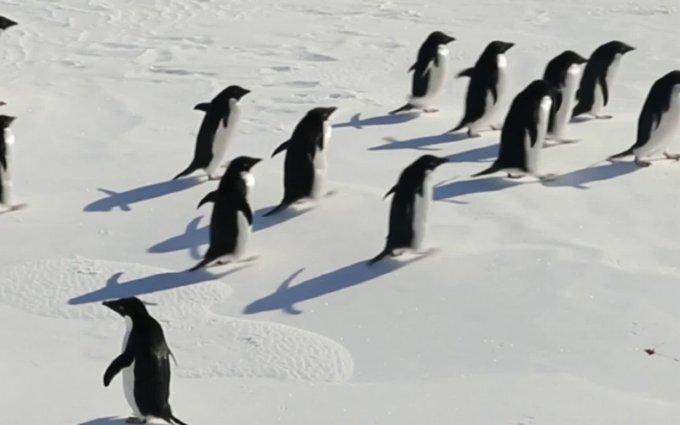 pingvinų prekybos sistemos eksploatavimo pareigūnas